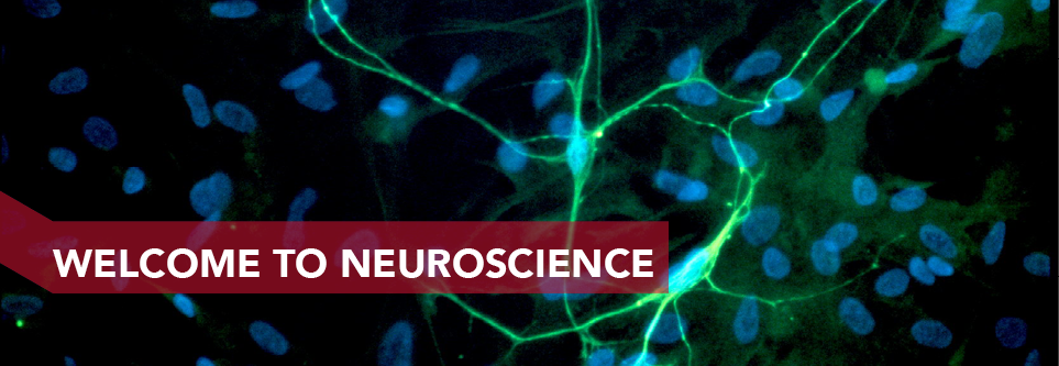 About Neuroscience